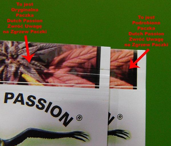 podrobki-dutch-passion-zestawienie2