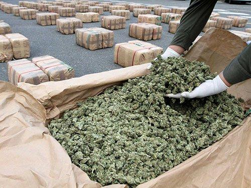 znaleziona-marihuana-6473