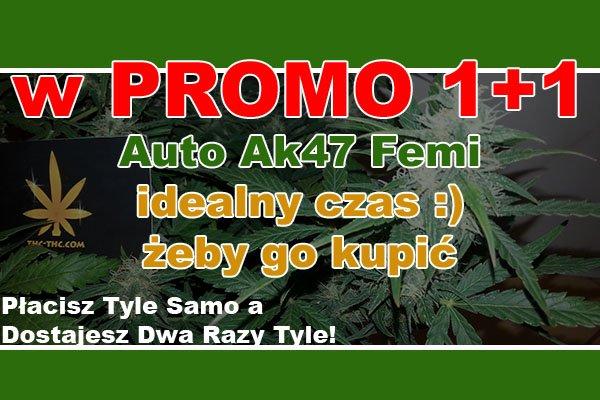 nasiona marihuany, nasiona konopi, auto ak47