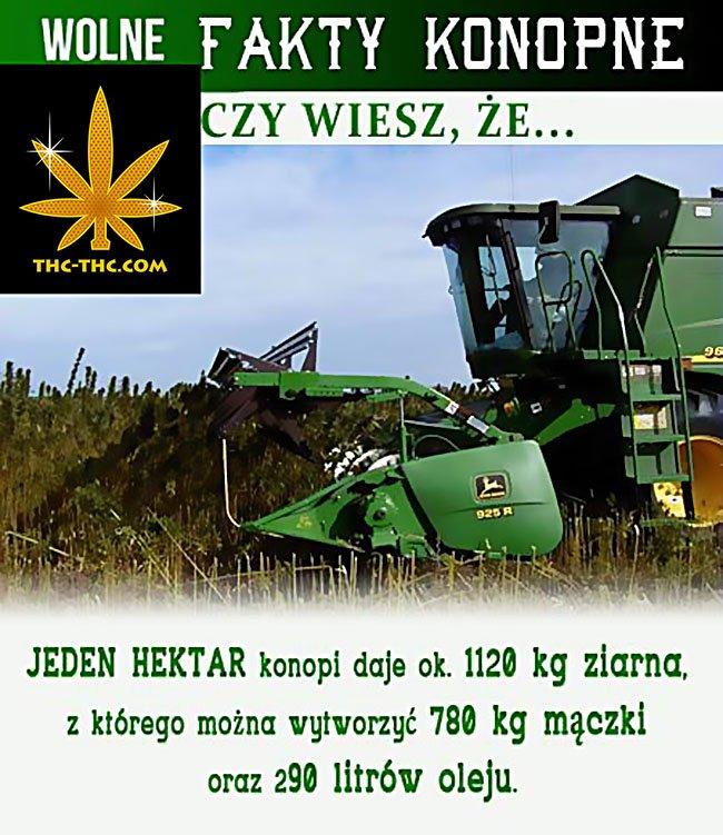 co-mozna-zrobic-hektara-konopi-nasion-66788