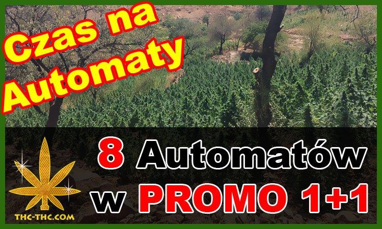 Nasiona Marihuany, Nasiona Konopi, Auto, Automatic, Autoflowering, Promocje 1+1