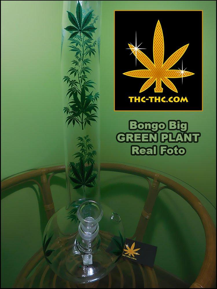 Bongo, Big, GREEN PLANT, Fajka Wodna, Zdjęcia, Real Foto