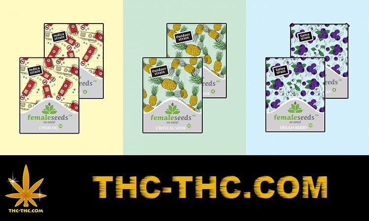 nasiona marihuany, konopi, female seeds