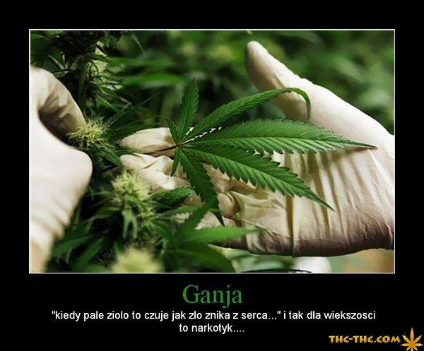 ganja, palę, zioło, marihuana, zły, narkotyk, serce