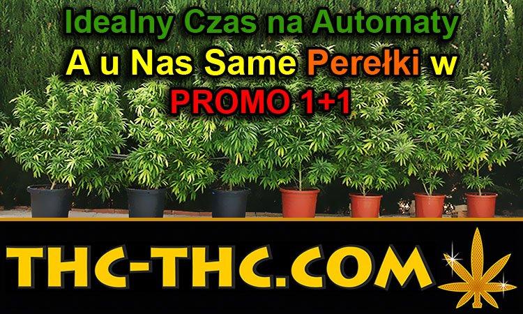 idealny, czas, auto, automaty, automatic, autoflowering, odmiany, nasiona, najlepsze, outdoor