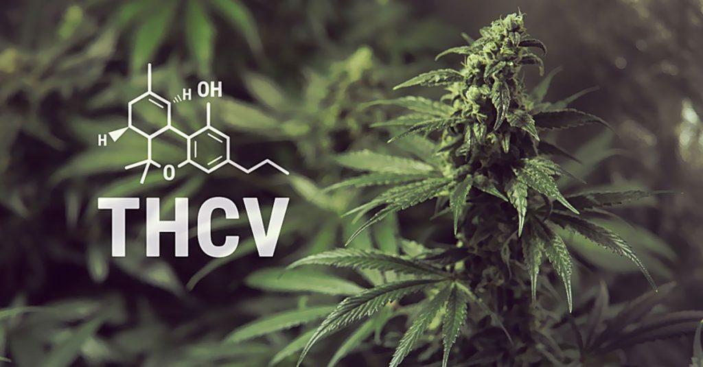 Jak Działa, THCV, THC, CBGVA, CB1, CB2, CBD, Kannabinoid, Endokannabinoidowy, Chorobę, Choroba, Parkinsona