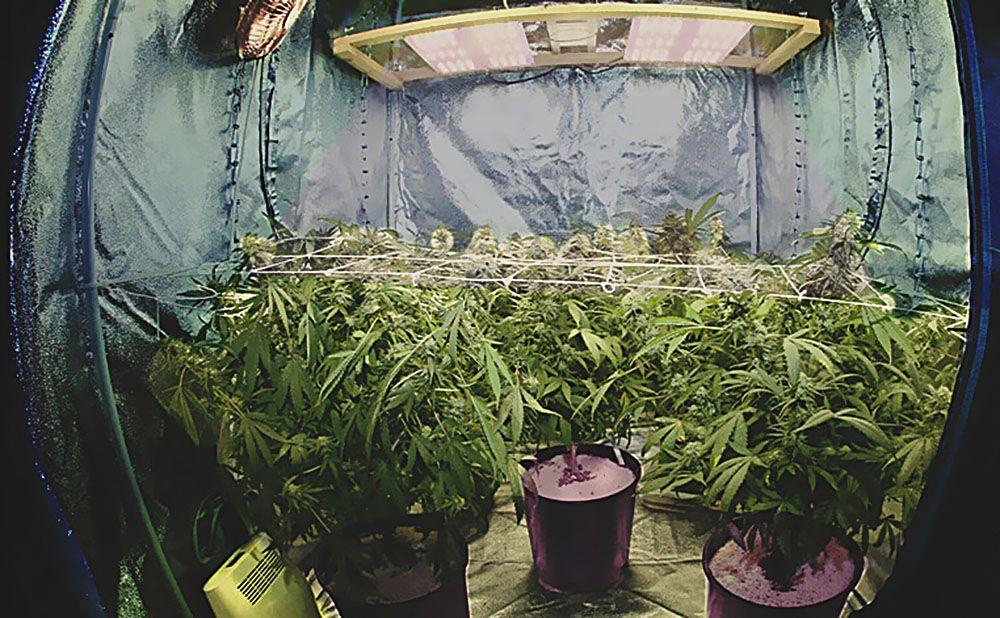 Mały Ogród, Mniej Doświadczonych, Wzrost Wegetatywny, Kwitnienie