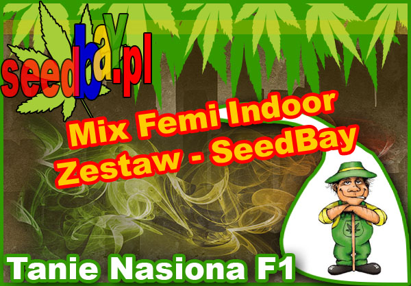 nasiona marihuany, nasiona konopi, feminizowane, mix, indoor, seedbay