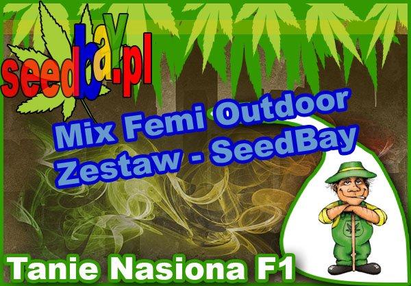 nasiona marihuany, nasiona konopi, feminizowane, mix, outdoor, seedbay
