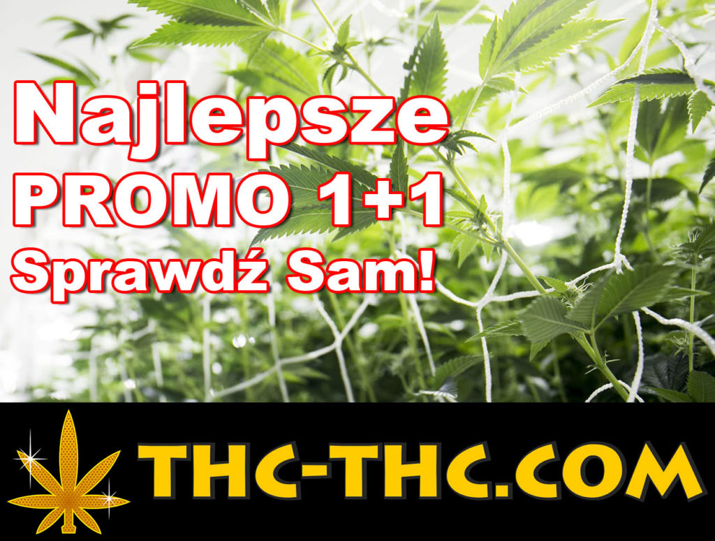 Najlepsze, Promocje 1+1, Promocja 1+1, Promo 1+1, Dutch Passion, Auto Mazar, Auto Ultimate, Auto White Widow, Think Different Automatic, Akseeds, Royal Queen Seeds, SeedBay
