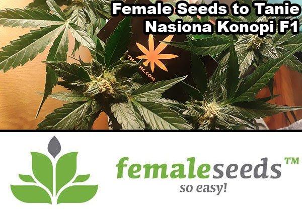 nasiona marihuany, nasiona konopi, f1, female seeds