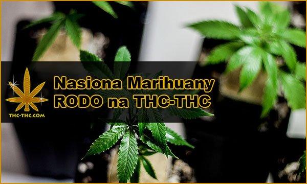 Nasiona Marihuany, Nasiona Konopi, RODO, THC-THC