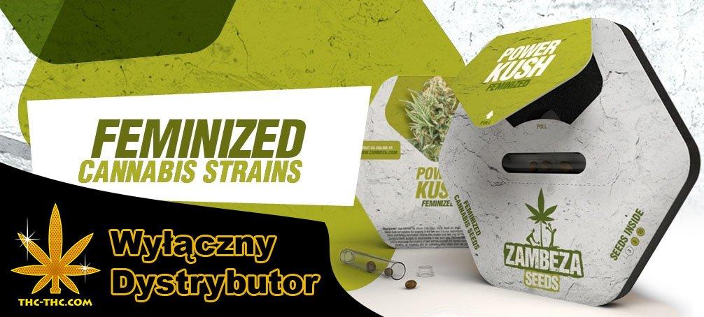 zambeza, seeds nasiona marihuany, nasiona konopi, feminizowane