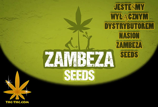 4 - Nasiona Marihuany, Nasiona Konopi, Zambeza Seeds