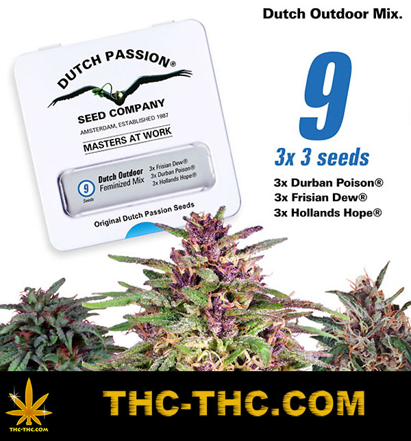 nasiona marihuany, nasiona konopi, dutch outdoor mix