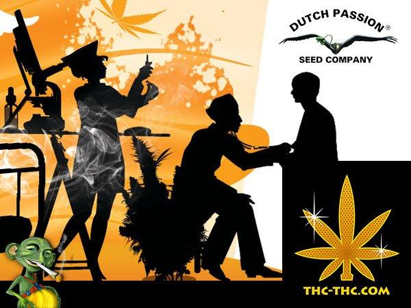 medyczne, odmiany, marihuany, cbd, dutch passion