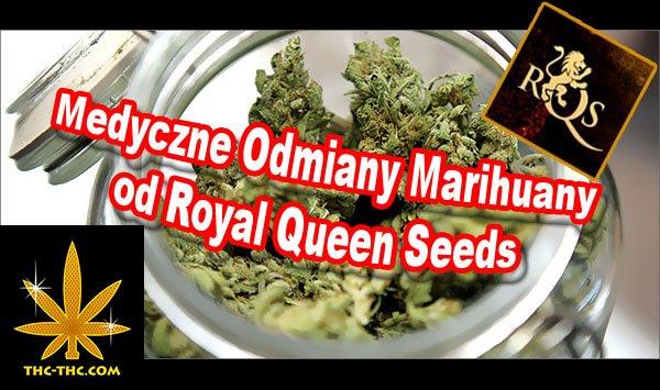 medyczne, nasiona, marihuany, konopi