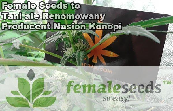female seeds, nasiona marihuany, thc