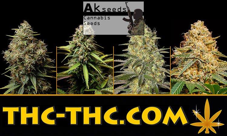Nasiona Marihuany, Nasiona Konopi, Akseeds, Ak482 Auto, Big Poison Auto, Crystal Kush Auto, Gold Mery Auto