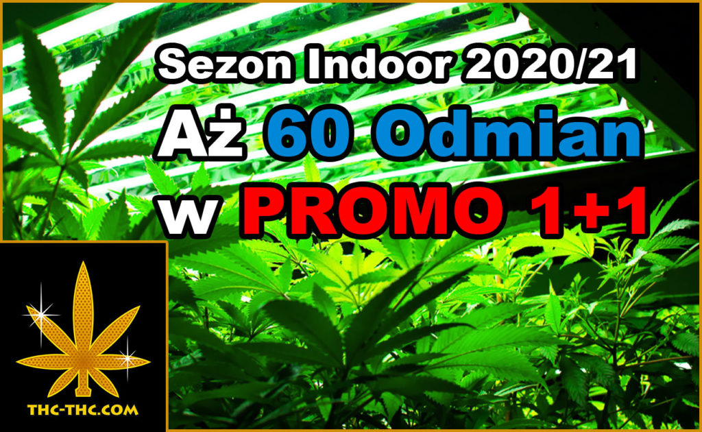 Nasiona Marihuany, Nasiona Konopi, THC, Sklep THC, Dutch Passion, Royal Queen Seeds, Oferta, Sezon, Indoor, Sezon Indoor, Promo 1+1, Promo Tygodnia, Promo 500+