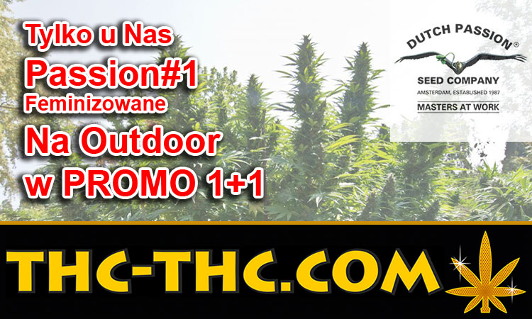 outdoor, Passion1, Dutch Passion, promo 1+1