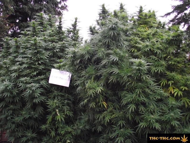 Plantacja Outdoor