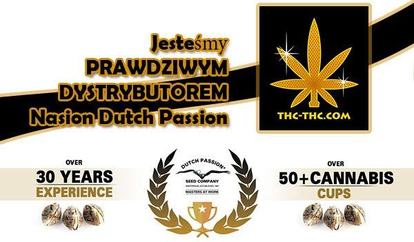 dystrybutor, dutch passion, nasiona marihuany, nasiona konopi
