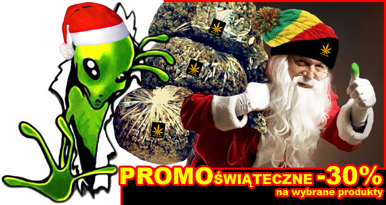 promocje świąteczne, nasiona marihuany, konopi