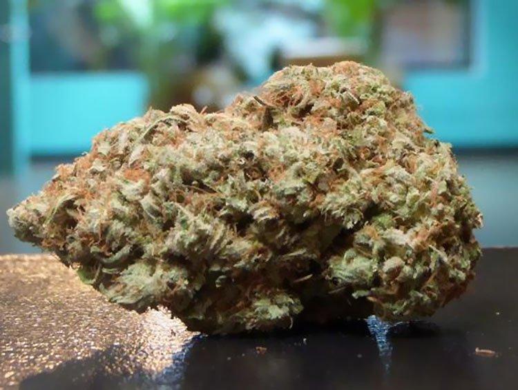 Chocolope, Nasiona konopi, Nasiona marihuany, Odmiana, Recenzja