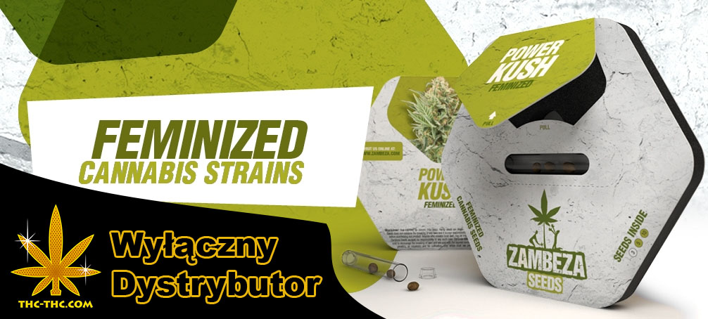 Zambeza Seeds, Nasiona, Marihuany, Konopi, Cannabis