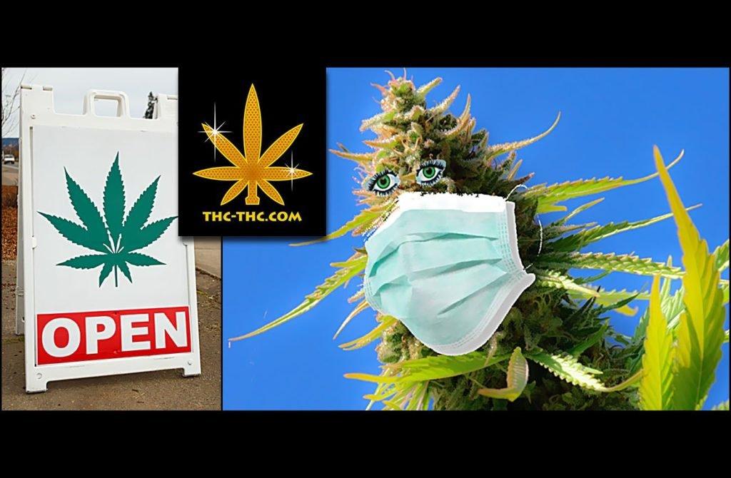 Koronawirus, Zakupy, Dostawy, Towar, Nasiona Marihuany, Nasiona Konopi, Nasiona Cannabis, Sklepie, Sklep, THC-THC