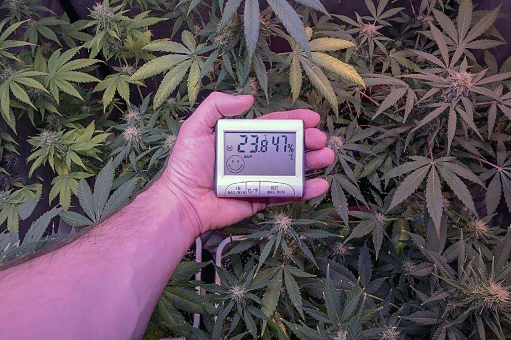 Wilgotność, Temperatura, Osuszenie, Osuszanie, Przygotowanie, Pomieszczenia, Uprawa Konopi, Uprawa Marihuany, Indoor, W Domu