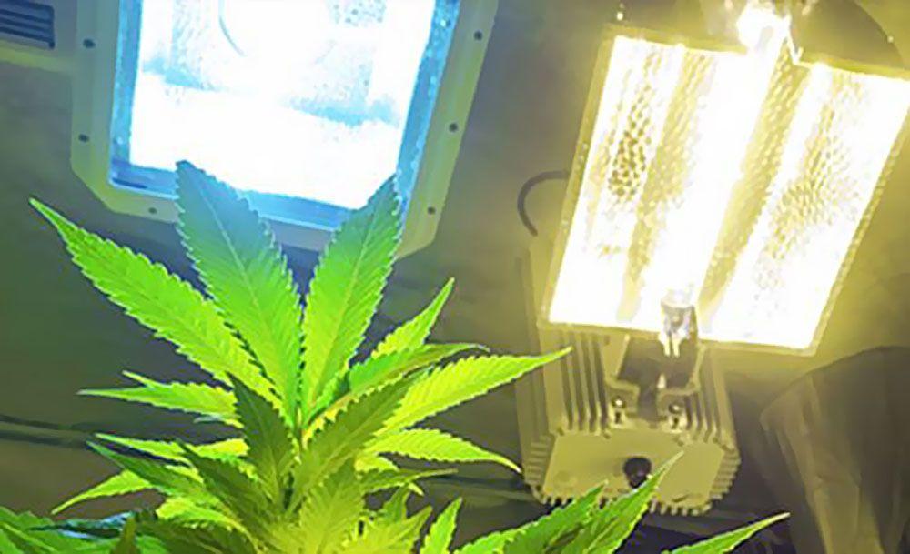 Właściwe, Właściwa, Lampy, Lampa, Uprawy, Uprawa, Hodowli, Hodowla, Marihuany, Konopi, Indoor, W Domu, Pomieszczeniu, Świetlówki, Świetlówki CFL, Panele LED, Lampy Sodowe HPS, Lampy Metalohalogenkowe MH, CFL, LED, HPS, MH
