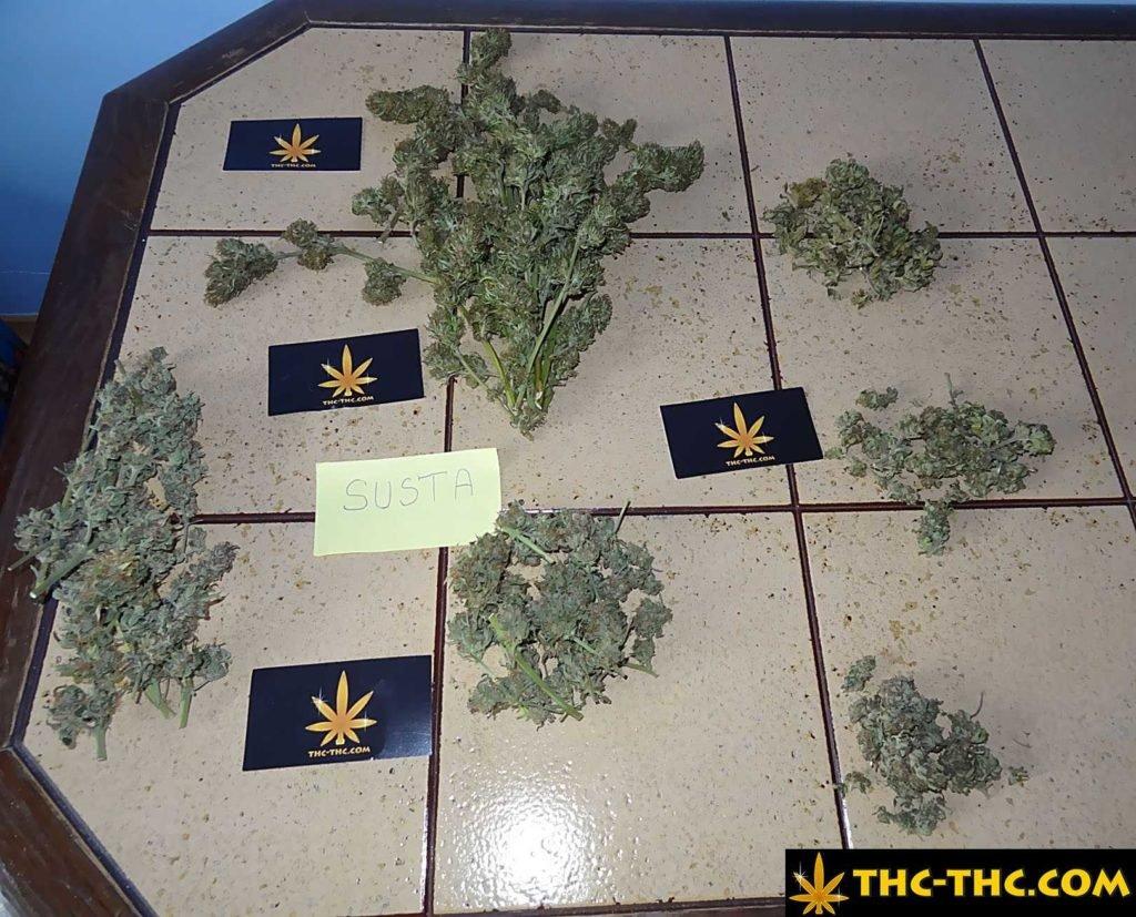 Zdjęcie, Marihuana, THC, Topy